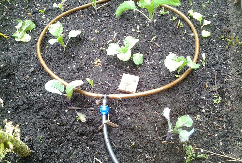 Bewässerungsanlage mit solarbetriebener Pumpe