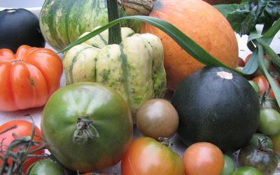 Klimaküche-Blog #5: Oktober