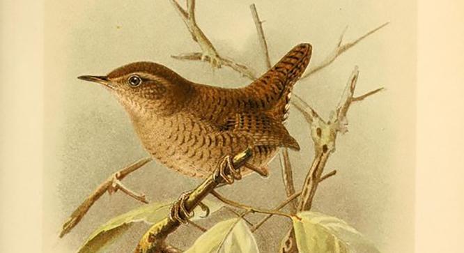 Zum Nachbauen: Vogelhäuser