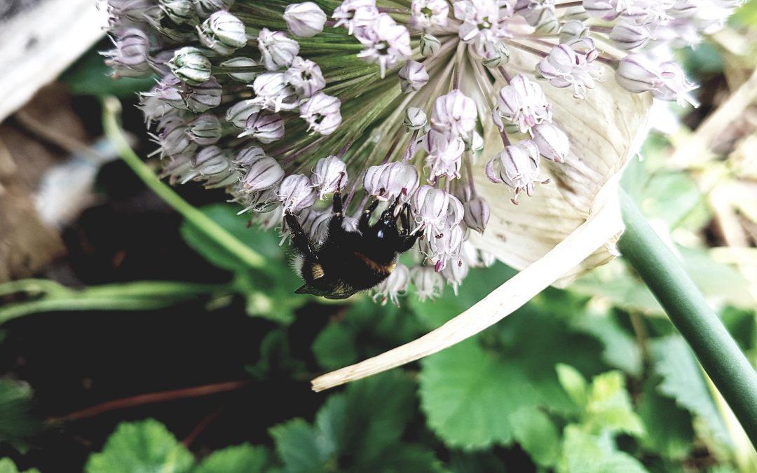 Workshop Futterpflanzen für Wildbienen