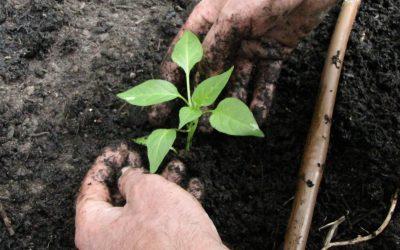 Klimaküche-Blog #9: Mai